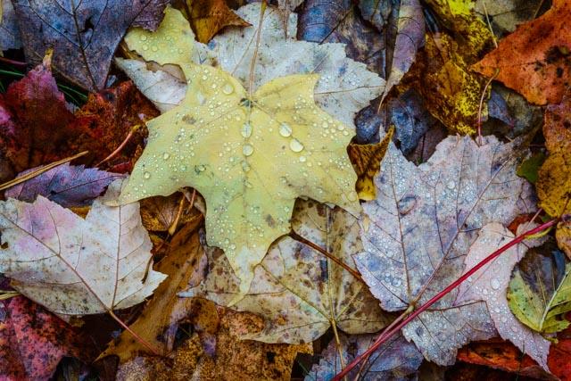 last-leaves