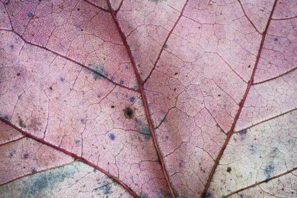 leaf-macro